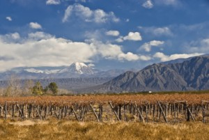 Aconcagua-Valley Heimat des IN SITU Carmenere
